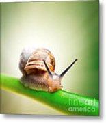 Snail On Green Stem Metal Print by Johan Swanepoel
