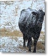 Snow Angus Metal Print