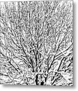 Snow Cover Metal Print