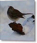 Snowbird Metal Print