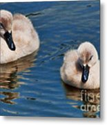 Soft And Fluffy Metal Print