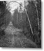 Solitude Forest Metal Print