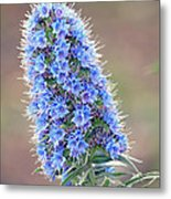 Some Of The Colors Of Spring Metal Print