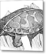 Southern Painted Turtle Metal Print