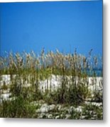 Sowing Wild Oats Metal Print
