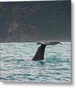 Sperm Whale Diving  Metal Print