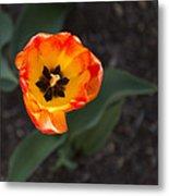 Spring Flowers No. 10 Metal Print
