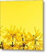 Spring Yellow Forsythia  Metal Print