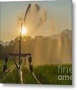 Sprinkler Irrigation Metal Print