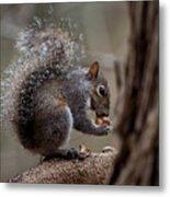 Squirrel II Metal Print