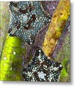 Starfish On Neptune Grass Metal Print
