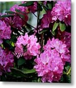 Still Life At North Puffin - Rhododendron With Butterfly Metal Print
