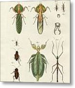 Strange Insects Metal Print
