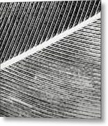 Structure Of Quill  Metal Print