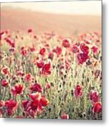 Stunning Poppy Field Landscape Under Summer Sunset Sky With Cros Metal Print