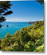 Subtropical Forest Of Abel Tasman Np In New Zealand Metal Print