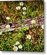 Summer Flowers On The Blue Ridge Parkway 7653 Metal Print