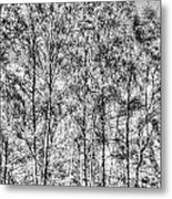 Summer Forest Trees Metal Print