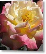 Summer Rose Metal Print