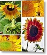 Sunflower Collage   Metal Print