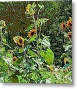 Sunflower Garden Metal Print by Annette Allman