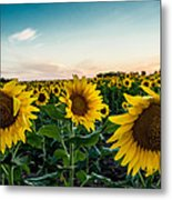 Sister Sunflowers Metal Print