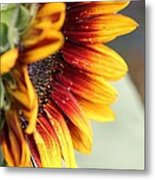 Sunflower Named The Joker Metal Print