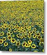 Sunflower Nirvana 13 Metal Print