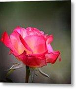 Sweet October Rose Metal Print