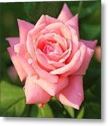 Sweet Pink Rose Metal Print by Carol Groenen
