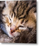 Sweet Small Kitten  Metal Print