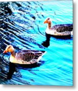 Swim With Me To The End Of Time  Metal Print