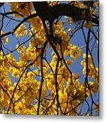Tabebuia Tree Blossoms Metal Print
