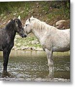 Tender Moments - Wild Horses  Metal Print
