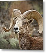 The Bighorn Metal Print