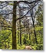 The Forest Path Metal Print by David Pyatt