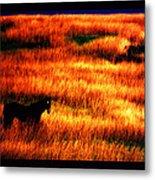 The Golden Grain Of A Sunset Dream Metal Print