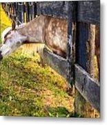 The Grass Is Greener... Metal Print
