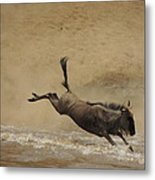 The Great Migration- Wildebeest Crossing  Metal Print