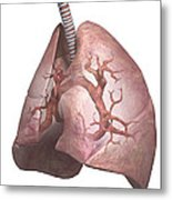 The Lungs Metal Print