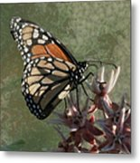 The Monarch Painterly Metal Print
