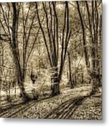 The Spring Forest Metal Print