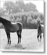 The Stallion Metal Print