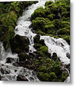 The Water Snake Metal Print
