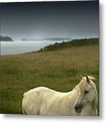 The Welsh Pony  Metal Print