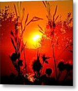 Thistles In The Sunset Metal Print
