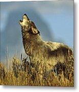 Timber Wolf Howling Idaho Metal Print