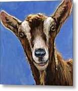 Toggenburg Goat On Blue Metal Print