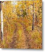 Trail In Golden Aspen Forest Metal Print
