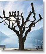 Tree And Bench Metal Print